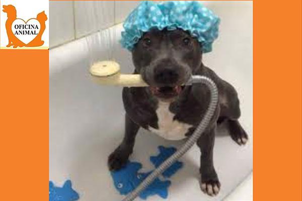 Banho Completo e mais um brinde surpresa que será sorteado entre os participantes! No Oficina Animal Pet Shop por R$ 29,90.